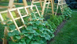 Как выращивать огурцы на шпалере в открытом грунте?