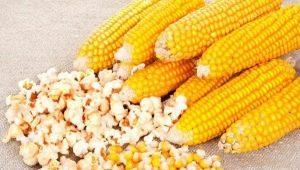 Кукуруза для попкорна: сорта и правила приготовления