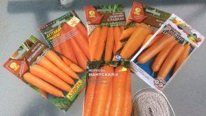 Морковь: посадка и уход в открытом грунте