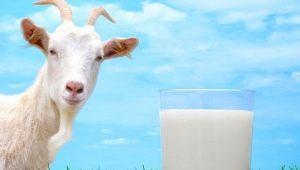 Насколько жирным является козье молоко?