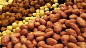 Обработка картофеля перед посадкой от насекомых-вредителей