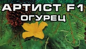 Огурцы «Артист F1»: характеристика сорта и правила выращивания