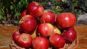 Описание и агротехника сорта яблони «Аксена»
