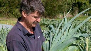 Особенности и выращивание лука-порея