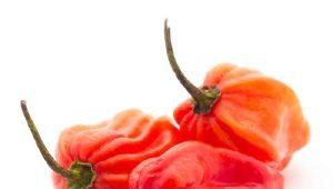 Перец «Хабанеро»: особенности, виды и выращивание