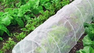 Под каким укрывным материалом лучше выращивать огурцы?