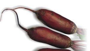 Свекла «Цилиндра»: характеристика и выращивание