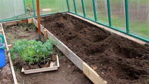 Тонкости процесса посадки помидоров в теплицу