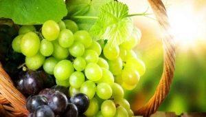 Выращивание и уход за виноградом: пошаговая инструкция и советы новичкам