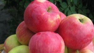 Яблоня «Мантет»: описание сорта, посадка и уход