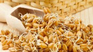 Как правильно прорастить пшеницу в домашних условиях и как ее употреблять?