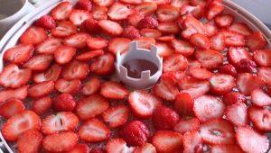 Как правильно сушить клубнику в электросушилке?