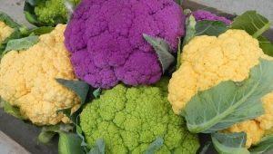 Какую капусту можно есть при панкреатите?