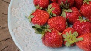 Клубника «Фея»: характеристика сорта и агротехника