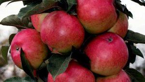 Колоновидная яблоня «Московское ожерелье»: описание сорта, посадка и уход