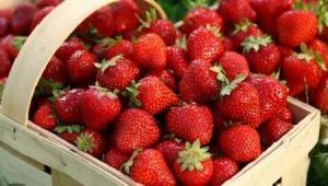 Описание сорта и особенности выращивания клубники «Берегиня»