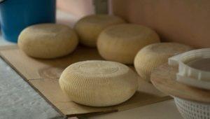 Осетинский сыр: свойства и рецепты приготовления