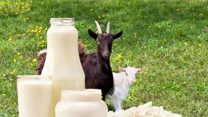 Польза и вред козьего молока для пожилых людей и правила употребления