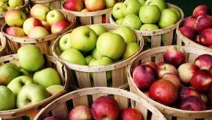 Ранние сорта яблок: преимущества и недостатки, описание и советы по выбору