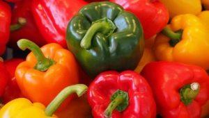Растим перец в теплице: всё о том, как грамотно сажать и ухаживать за душистым овощем