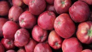 Сорт яблок «Глостер»: характеристика и правила выращивания