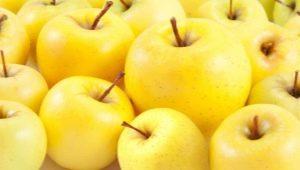 Свойства и состав, калорийность и пищевая ценность яблок