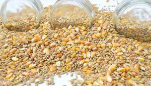 Воздушная пшеница: польза и вред, рецепты приготовления в домашних условиях