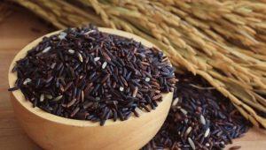 Черный рис: калорийность, польза и вред, рецепты приготовления