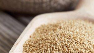 Семена амаранта: что содержат, как употреблять и готовить?