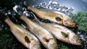 Минтай: особенности и свойства рыбы, правила выбора и употребления