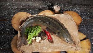 Красная рыба: виды и места обитания, свойства и приготовление