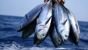 Тунец: виды, свойства и способы приготовления