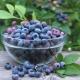 Голубика «Либерти»: описание сорта и мнение дачников