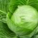 Белокочанная капуста: химический состав и КБЖУ