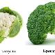 Брокколи и цветная капуста: в чем разница?