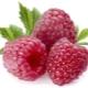 Какие витамины и минералы содержатся в малине?