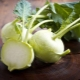 Капуста кольраби: характеристики, выращивание и способы приготовления