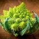Капуста «Романеско»: особенности посадки и выращивания, полезные свойства и рецепты