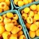 Желтая малина: разновидности и особенности выращивания