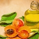 Абрикосовое масло: полезные свойства и правила использования