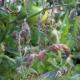 Болезни и вредители томатов: причины и способы борьбы
