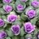Декоративная капуста: виды, выращивание и уход