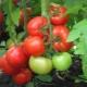 Характеристика гибридного сорта томатов «Жонглер  F1»