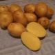Характеристика и выращивание сорта картофеля «Сынок»