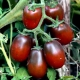 Характеристика томатов «Черный Мавр» и особенности их выращивания