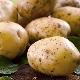 Как вырастить картофель «Удача»?