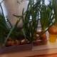 Как вырастить лук на подоконнике?