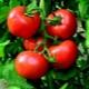 Как вырастить томат «Богата хата»?