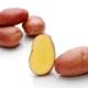 Картофель «Ароза»: особенности сорта и тонкости выращивания