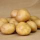 Картофель «Колобок»: характеристика сорта и выращивание